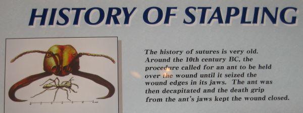 ant_stapling.jpg