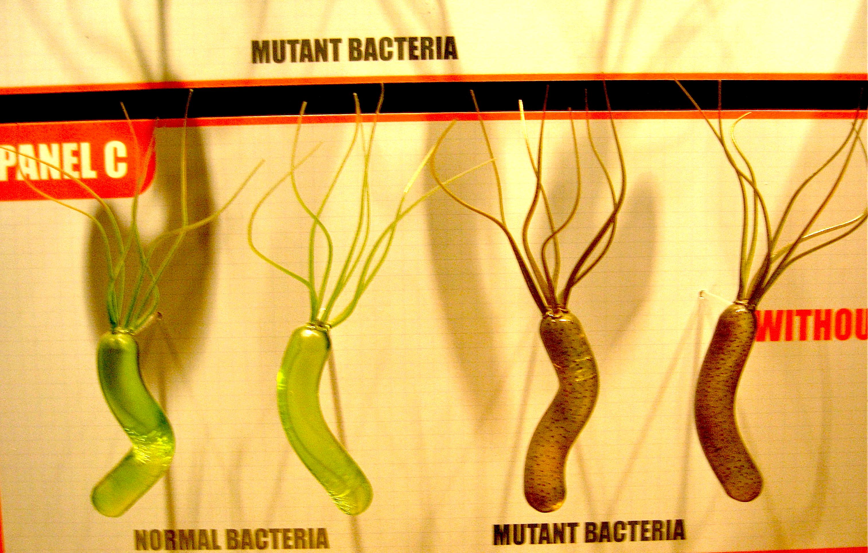 mutant-bacteria