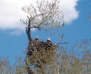 eagles-5